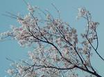 image/2011-04-10T13:35:24-1.JPG