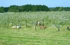 りんご風土世界一☆【のと】